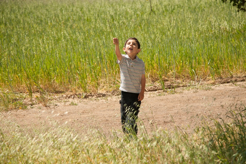 Boy on path in grassy field